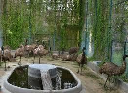 Gulab bagh zoo