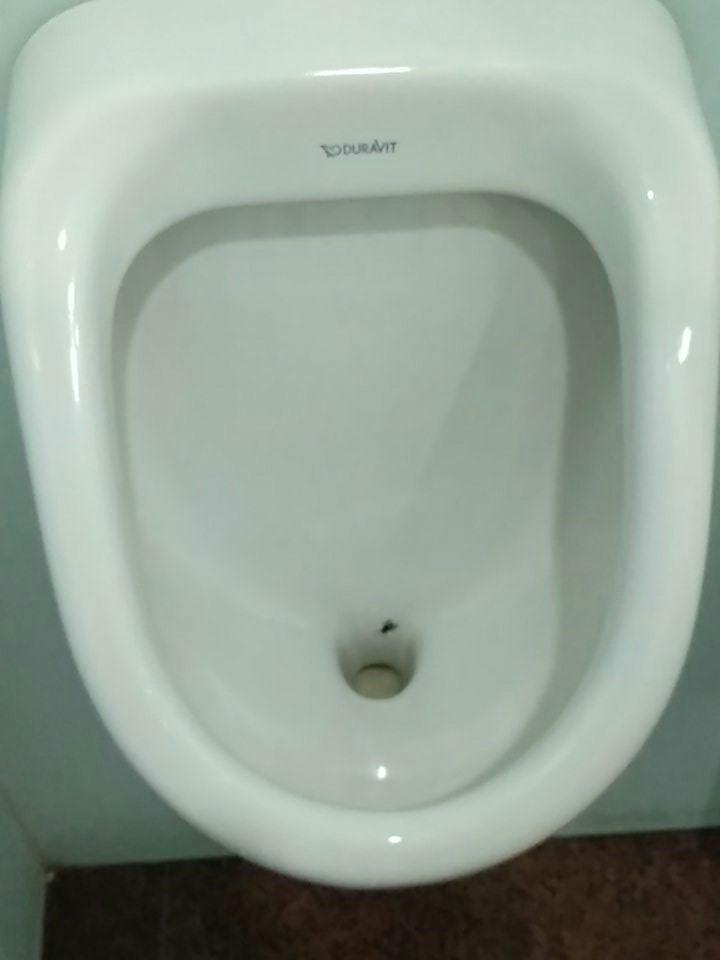 fake fly in Urinals