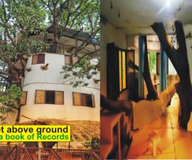 treehouse udaipur